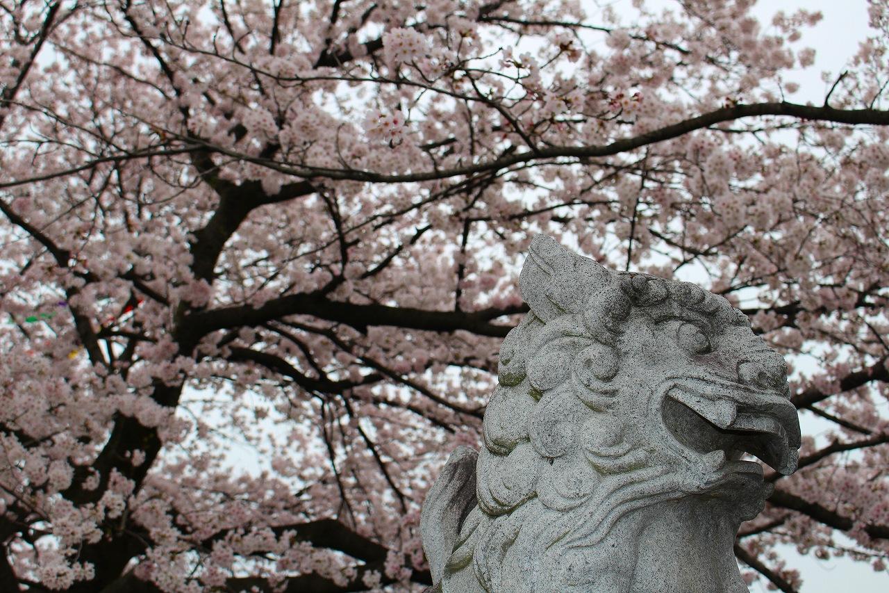 桜 白龍神社 (4)