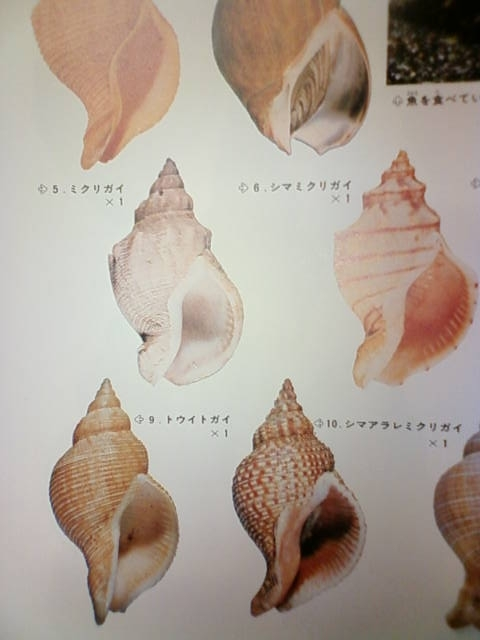 shell_b.jpg