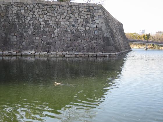 石垣ときどき梅林17