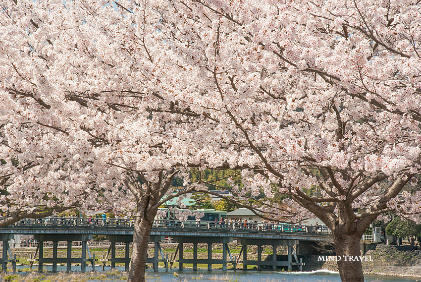 渡月橋 桜2
