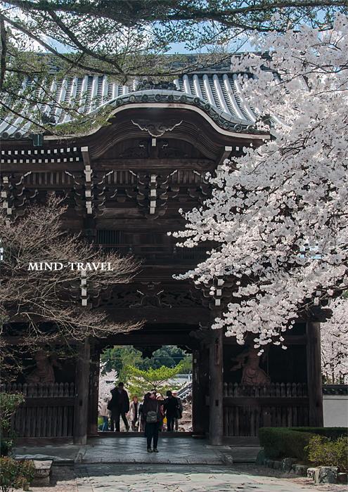 粉河寺 桜2