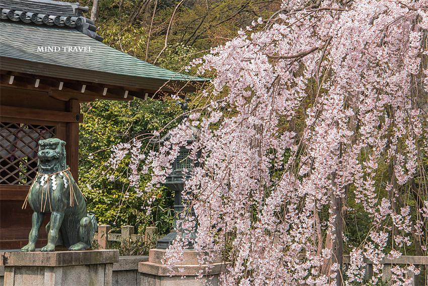 大石神社 しだれ桜 狛犬