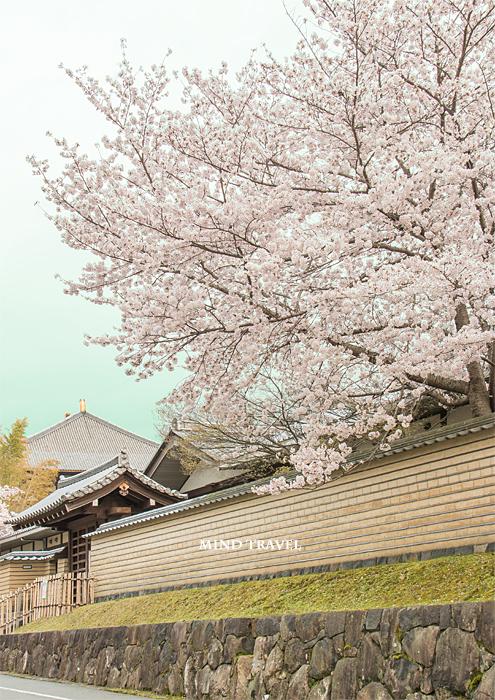 東大寺 大仏殿 桜