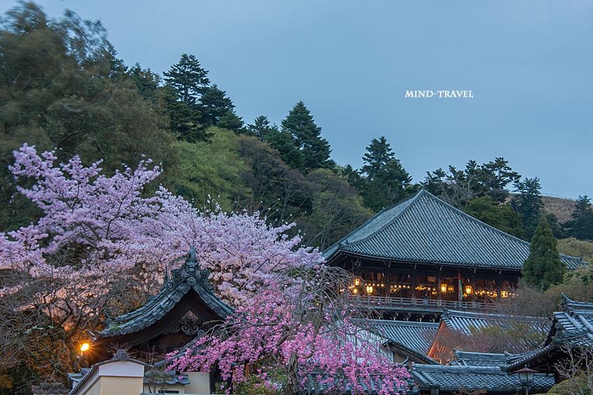 二月堂 夜桜
