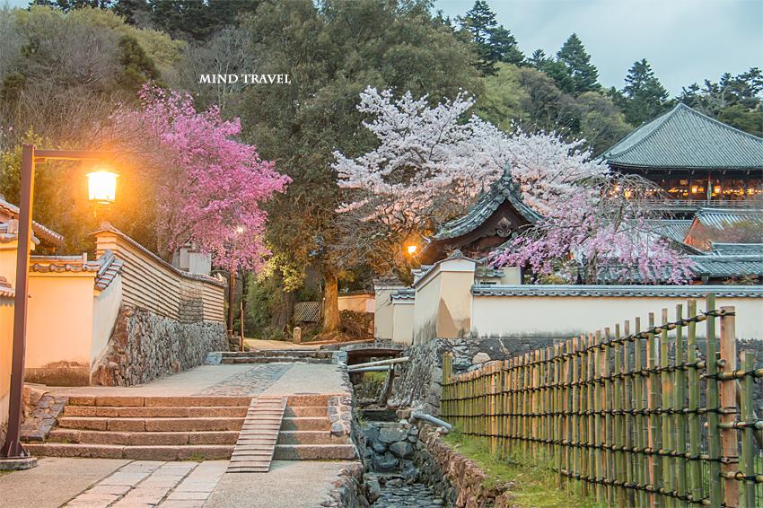 二月堂 裏参道 夜桜