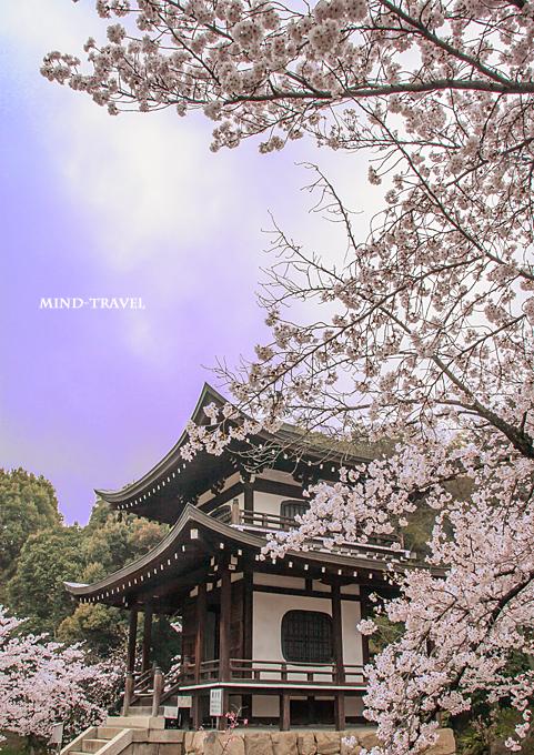 勧修寺 観音堂-桜2