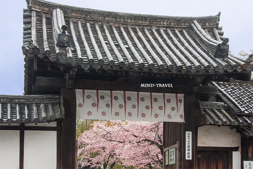 勧修寺 門 桜