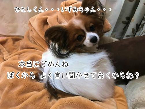 DkZe4__Vぎせい6