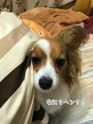 YINbcL3eふとん4
