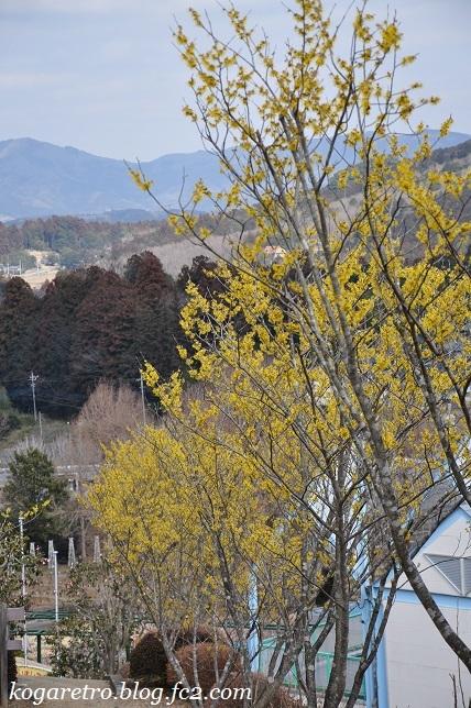フラワーパークの春の彩3