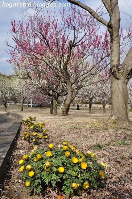 フラワーパークの春の彩4