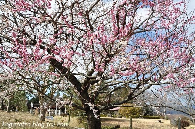 フラワーパークの春の彩2