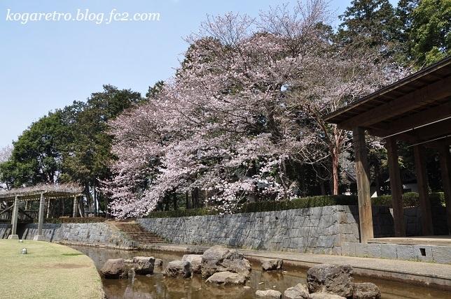 2017ネーブルパークの桜
