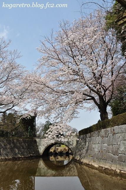2017ネーブルパークの桜2
