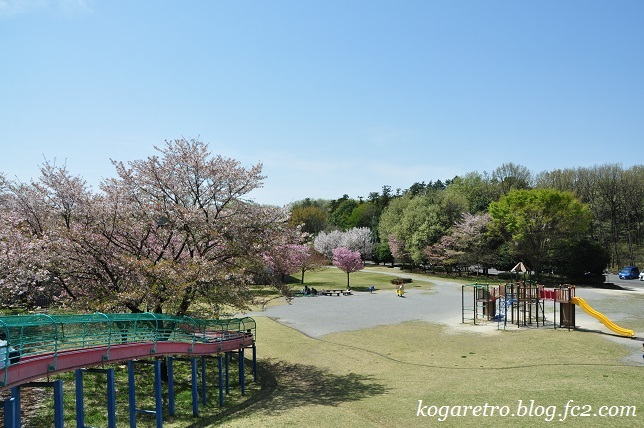 野木の公園で八重桜3