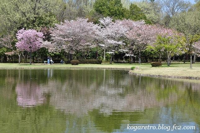 野木の公園で八重桜