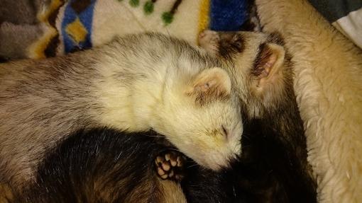 3月1日のマルコとミッキー(マルコの右目の怪我後)