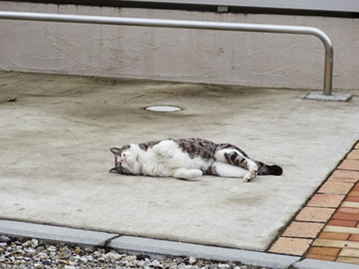20170409-cat01.jpg