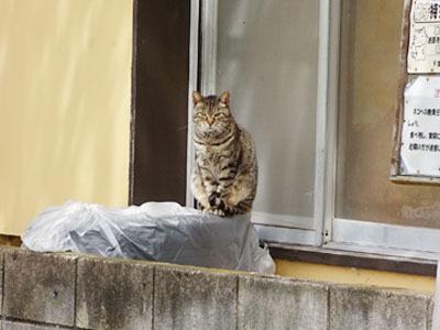20170410-cat01.jpg