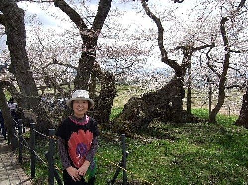 石部桜001