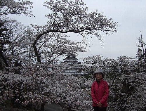 鶴ヶ城の桜003