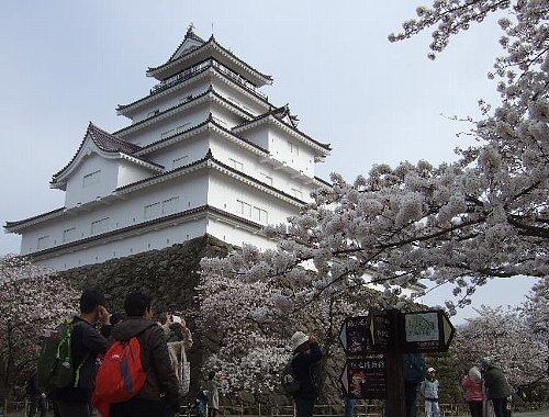 鶴ヶ城の桜004