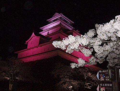 鶴ヶ城の夜桜004