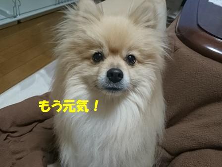 20170315a_1.jpg