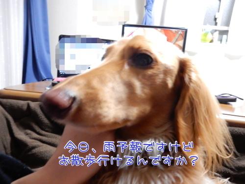 DSCN4688_20170222212116602.jpg