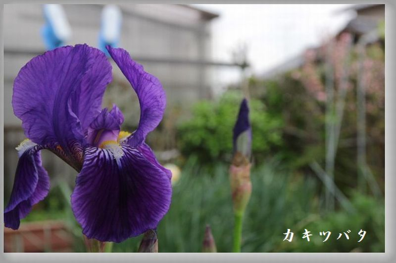 IMG_1419.jpg