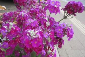 3月5日の植栽