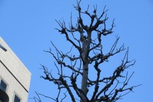 3月16日の青空