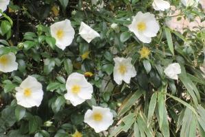 5月1日の白花