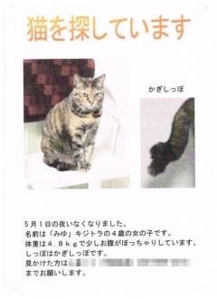 201705_chirashi.jpg