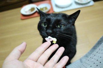 kotasuzu320.jpg