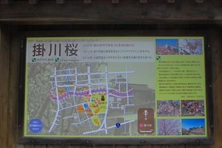 掛川桜とは・・・