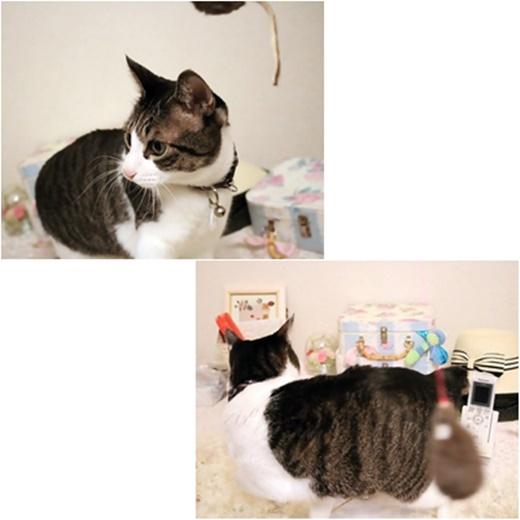 cats1_201704192101128b5.jpg