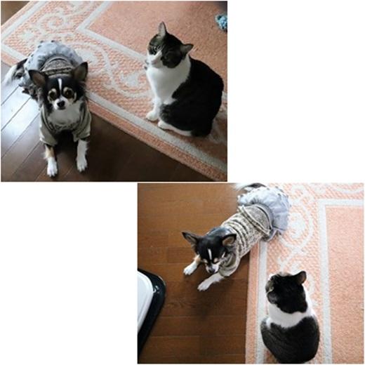 cats_201704081623267d0.jpg