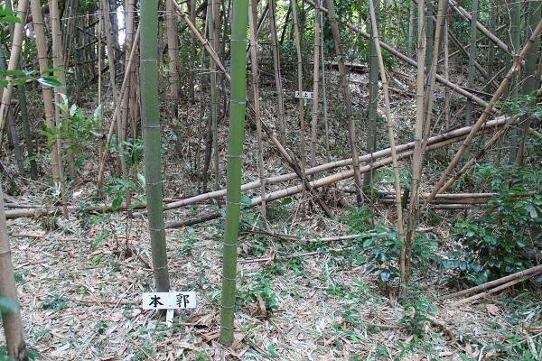 okasabe (8)