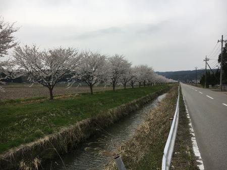 田鶴浜吉田川沿い