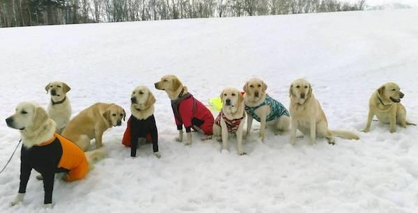 今季最後の雪遊び 手稲山にて