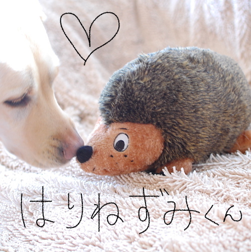 ビッグサイズわんこ用おもちゃ ハリネズミくん