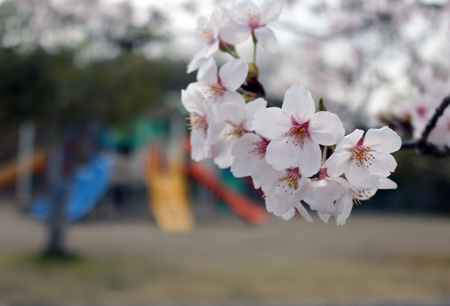 綾部・紫水ヶ丘公園1