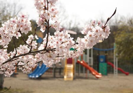 綾部・紫水ヶ丘公園2