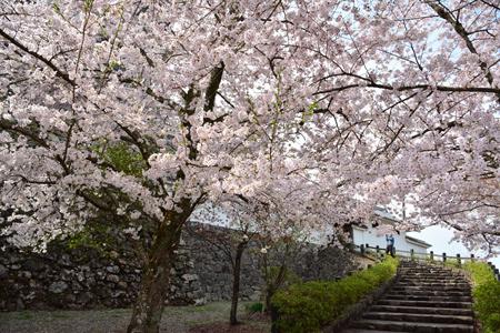 福知山城5