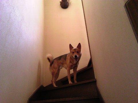 二階へ誘う