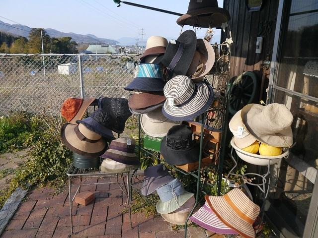 帽子セール