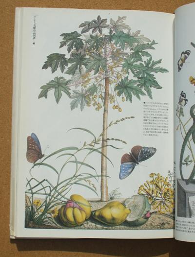 荒俣宏 昆虫の劇場 06