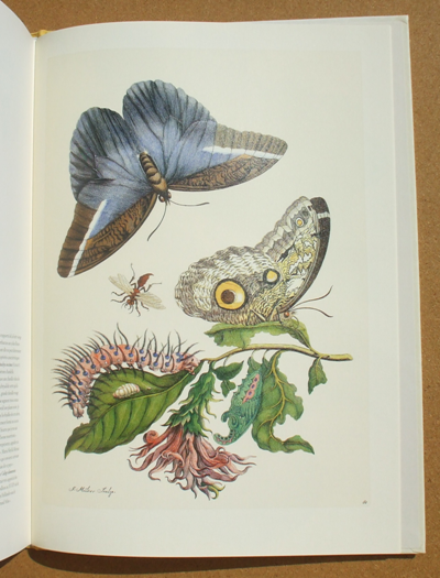 merian - insects of surinam 05