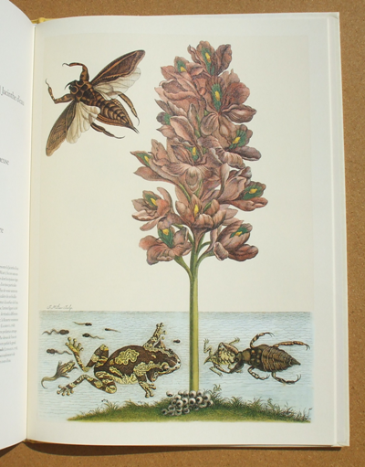 merian - insects of surinam 04